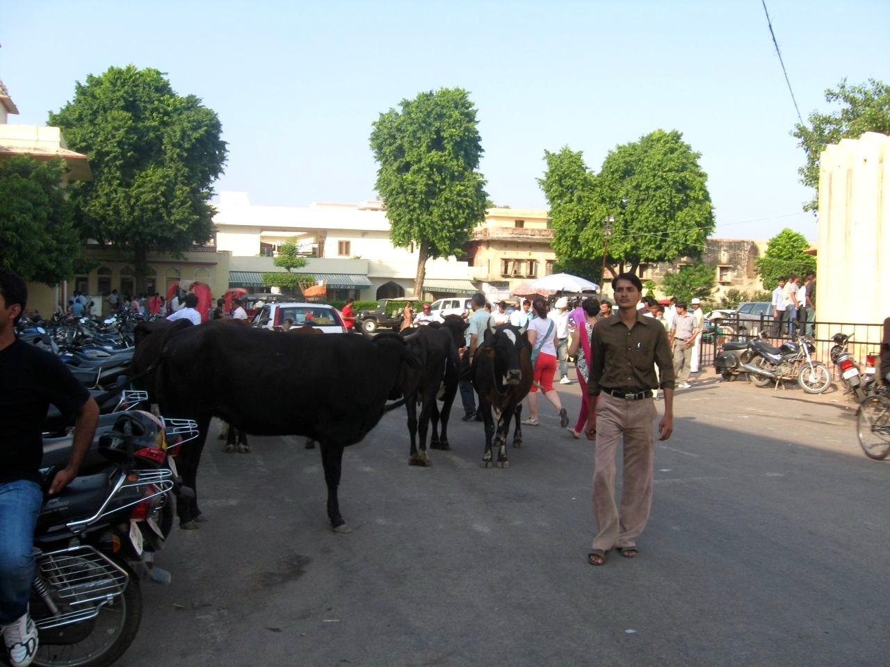 Jaipur 1 05