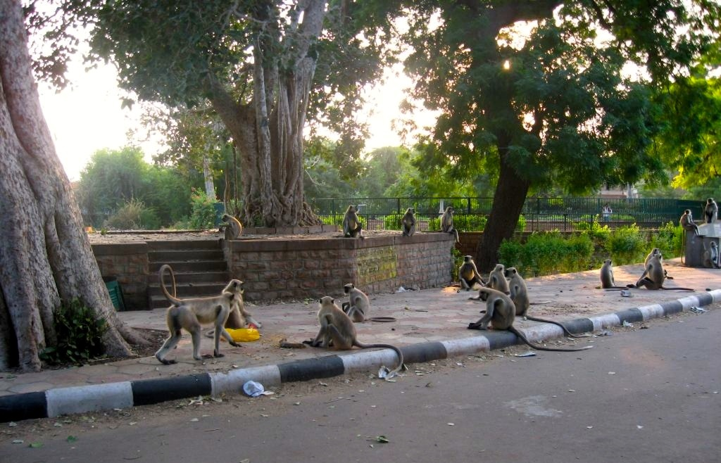 Jodhpur 1 32