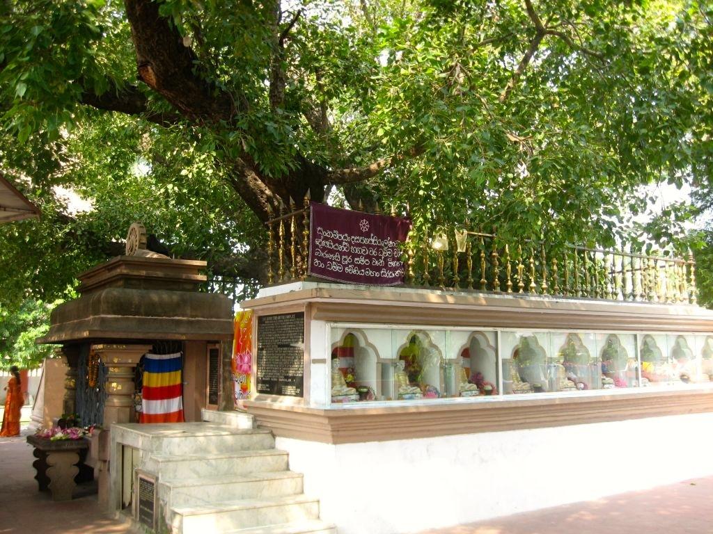 Sarnath 1 05