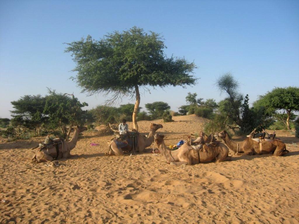Thar desert 1 03