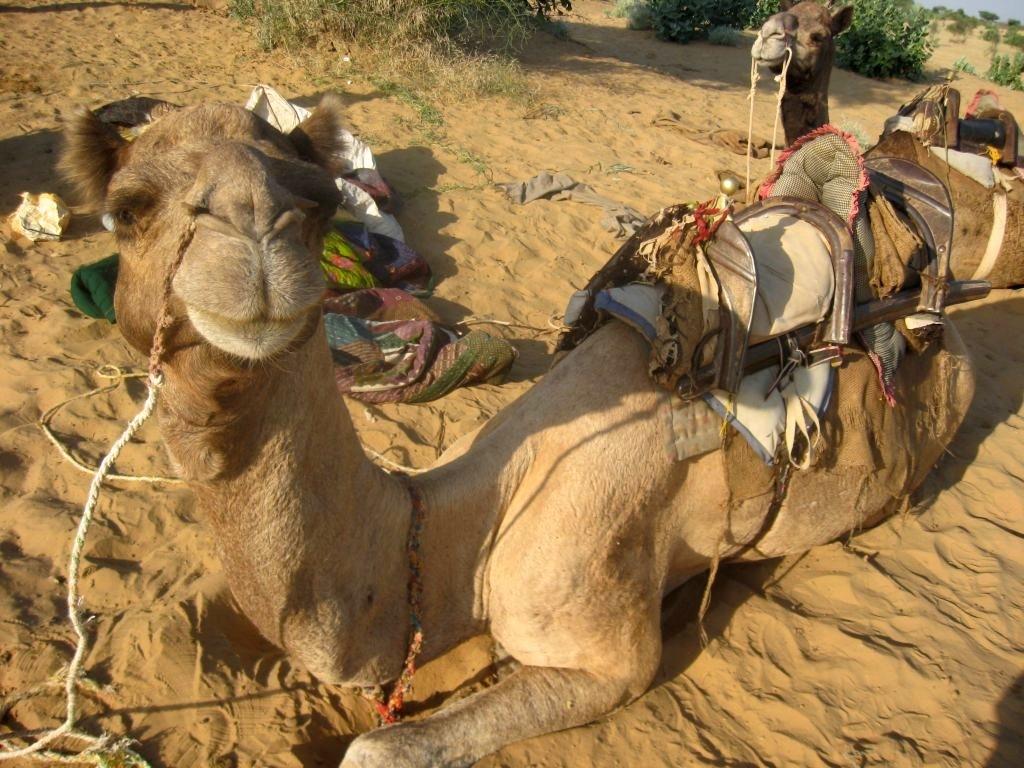 Thar desert 1 04