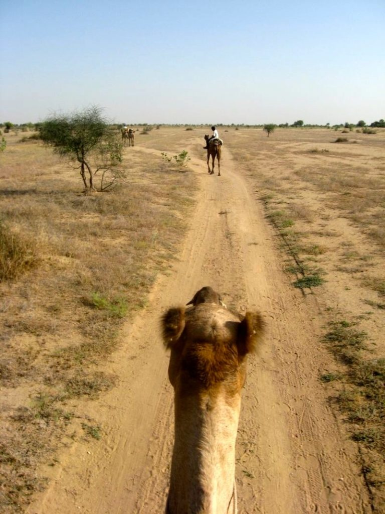 Thar desert 1 20