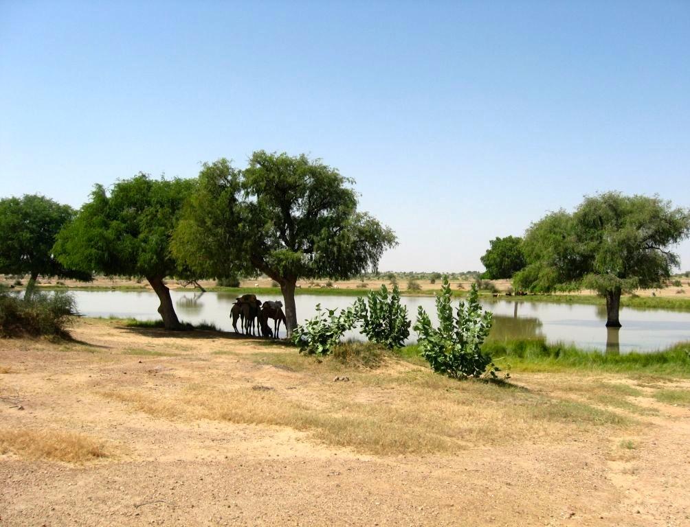 Thar desert 1 26