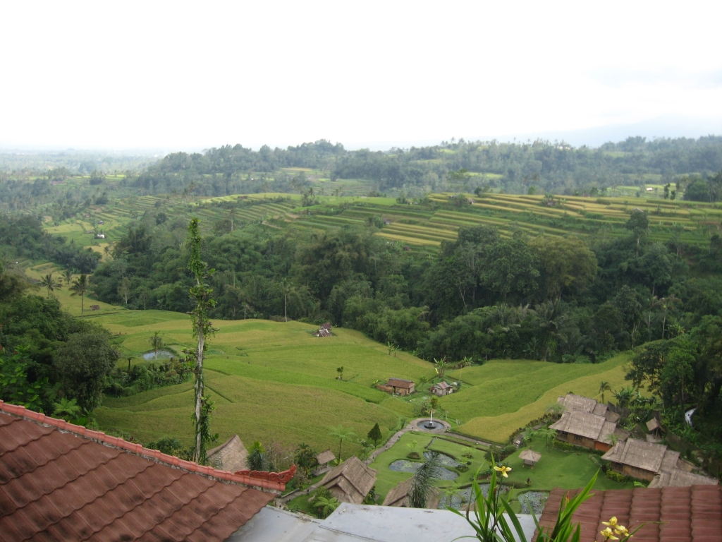 Rice terraces 02