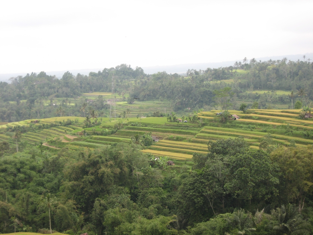 Rice terraces 06