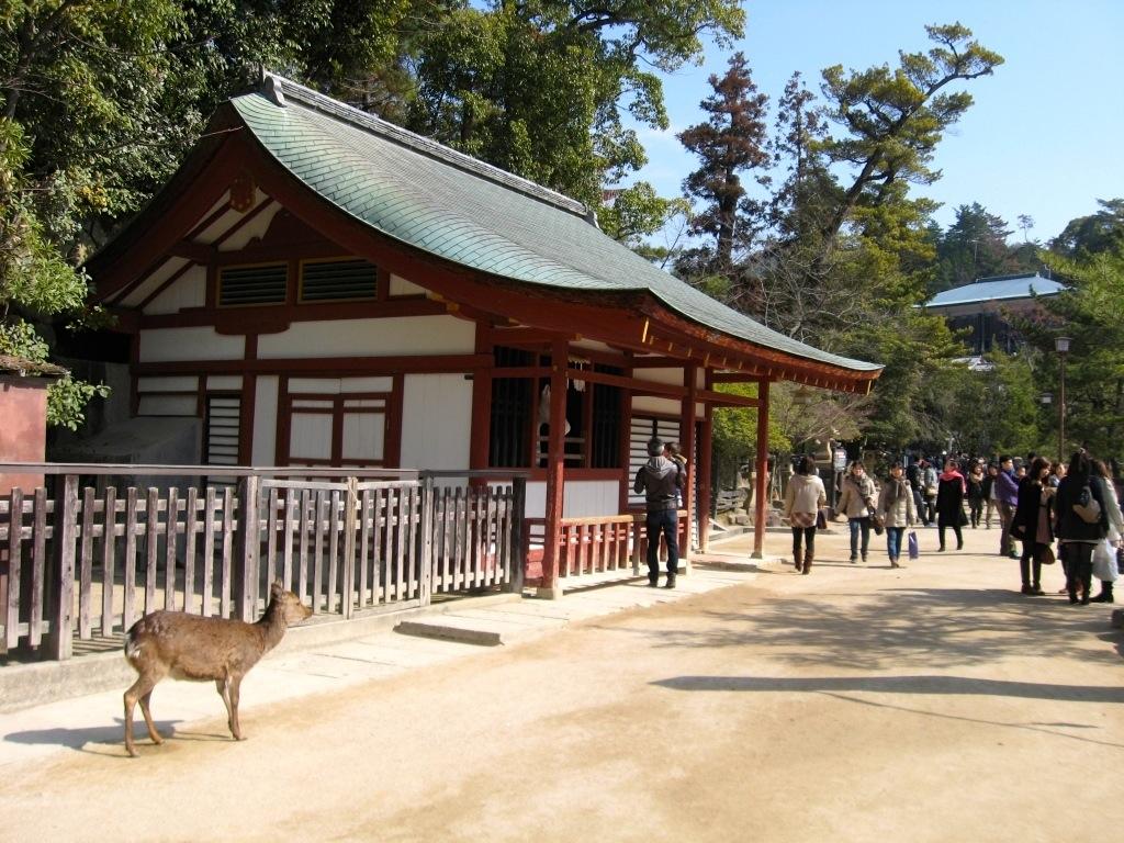 Miyajima 1-05