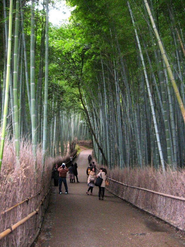 Kyoto 6-10