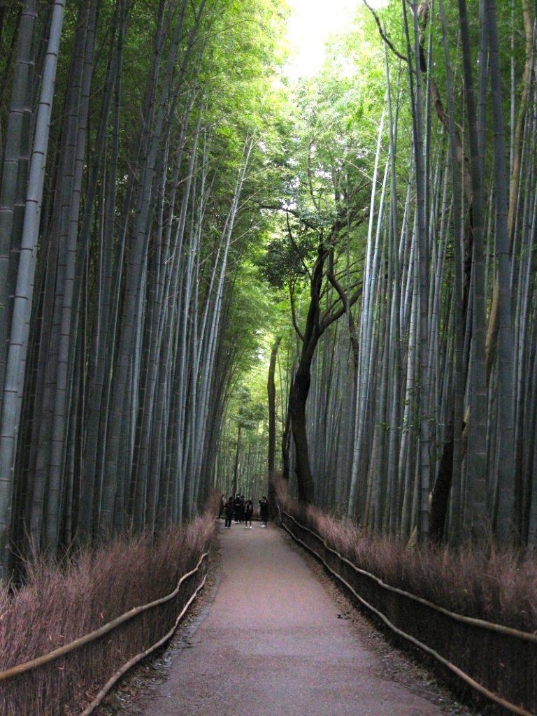 Kyoto 6-11