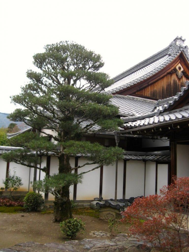 Kyoto 6-16