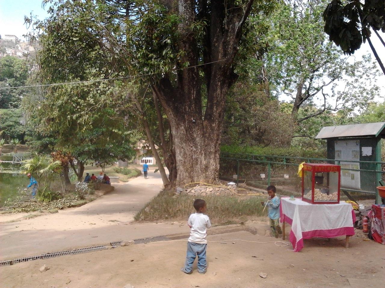 Madagascar 2-15