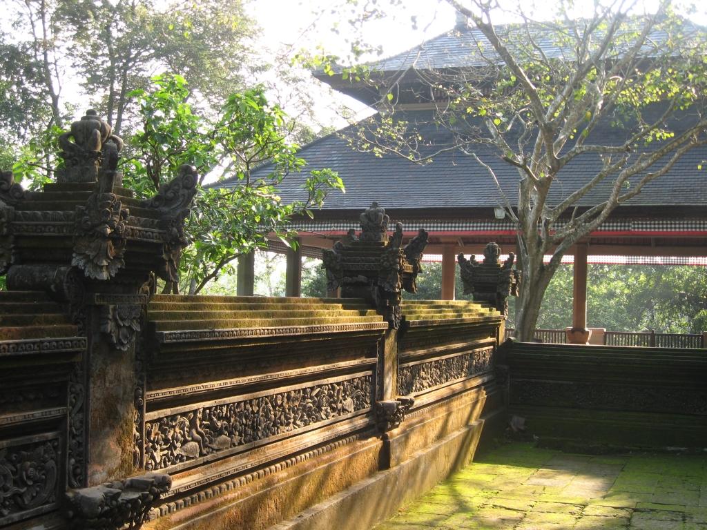 Monkey forest 15