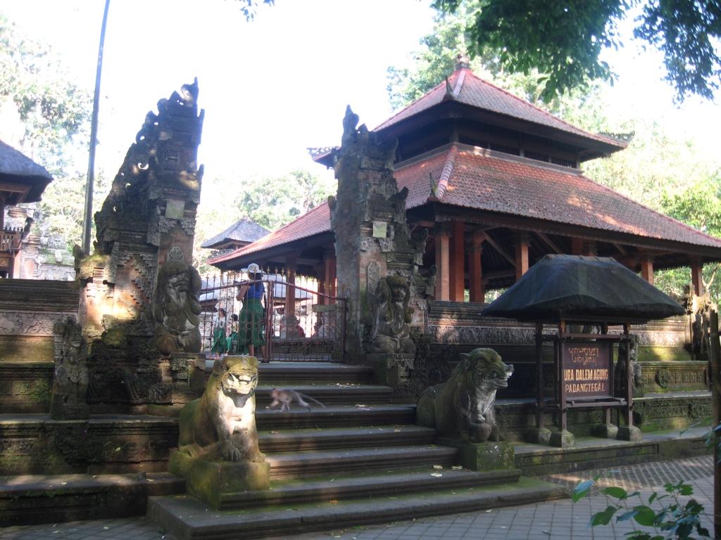 Monkey forest 18
