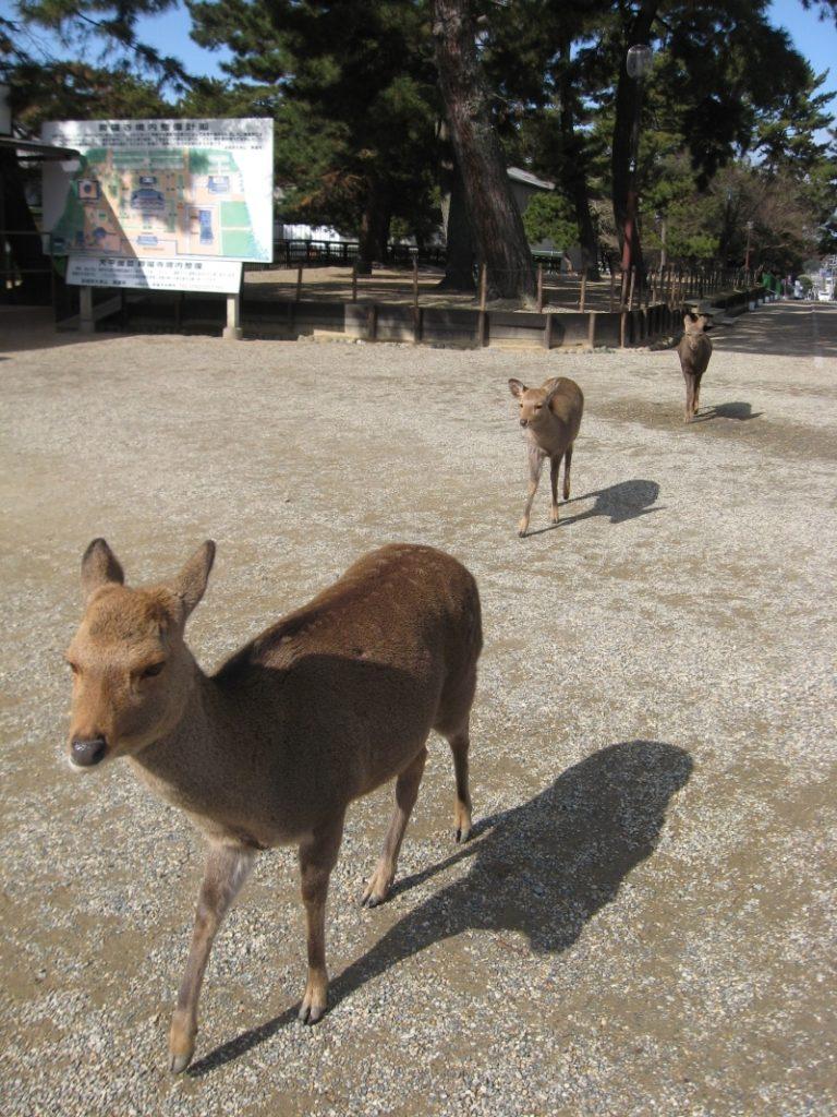 Nara 0-05