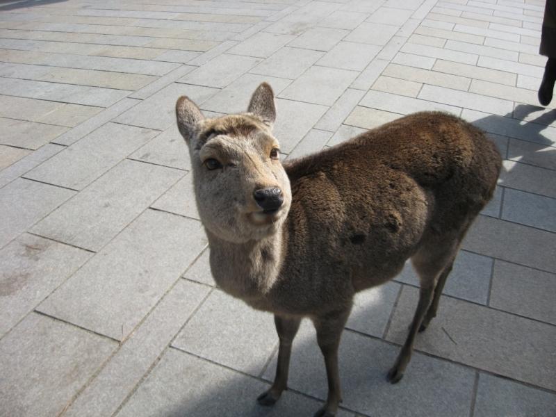 Nara 0-07