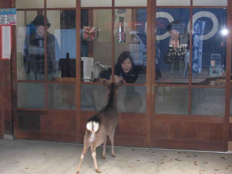 Nara 0-08