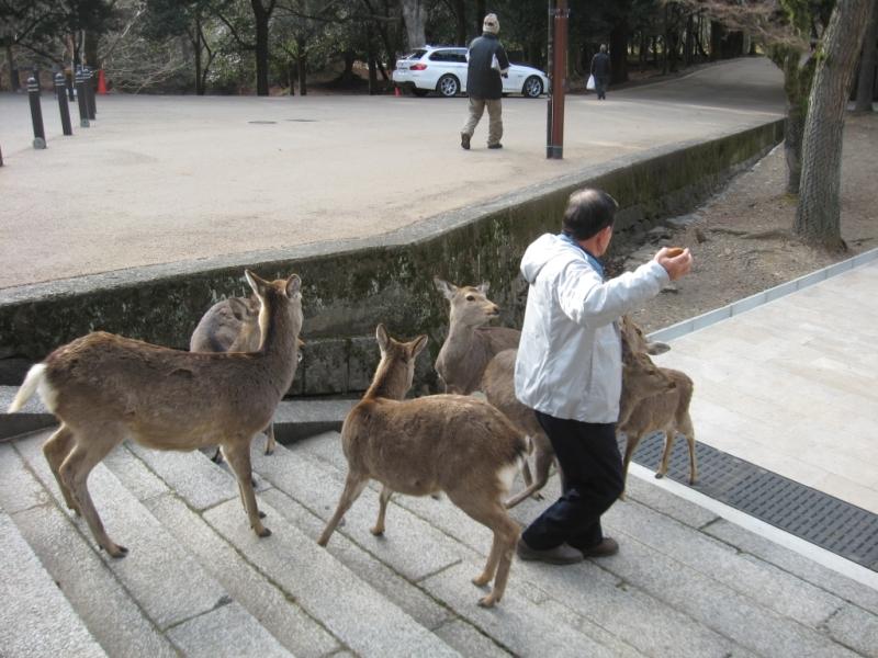 Nara 0-09