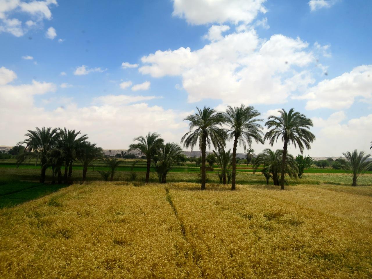 Trem no Egito 1-14