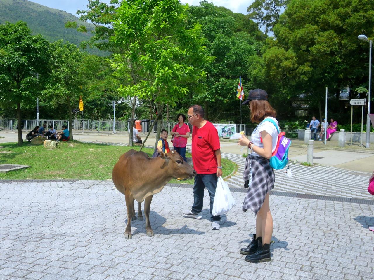 Hong Kong 3 27