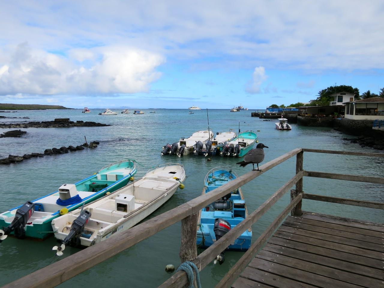 Galapagos 1 06
