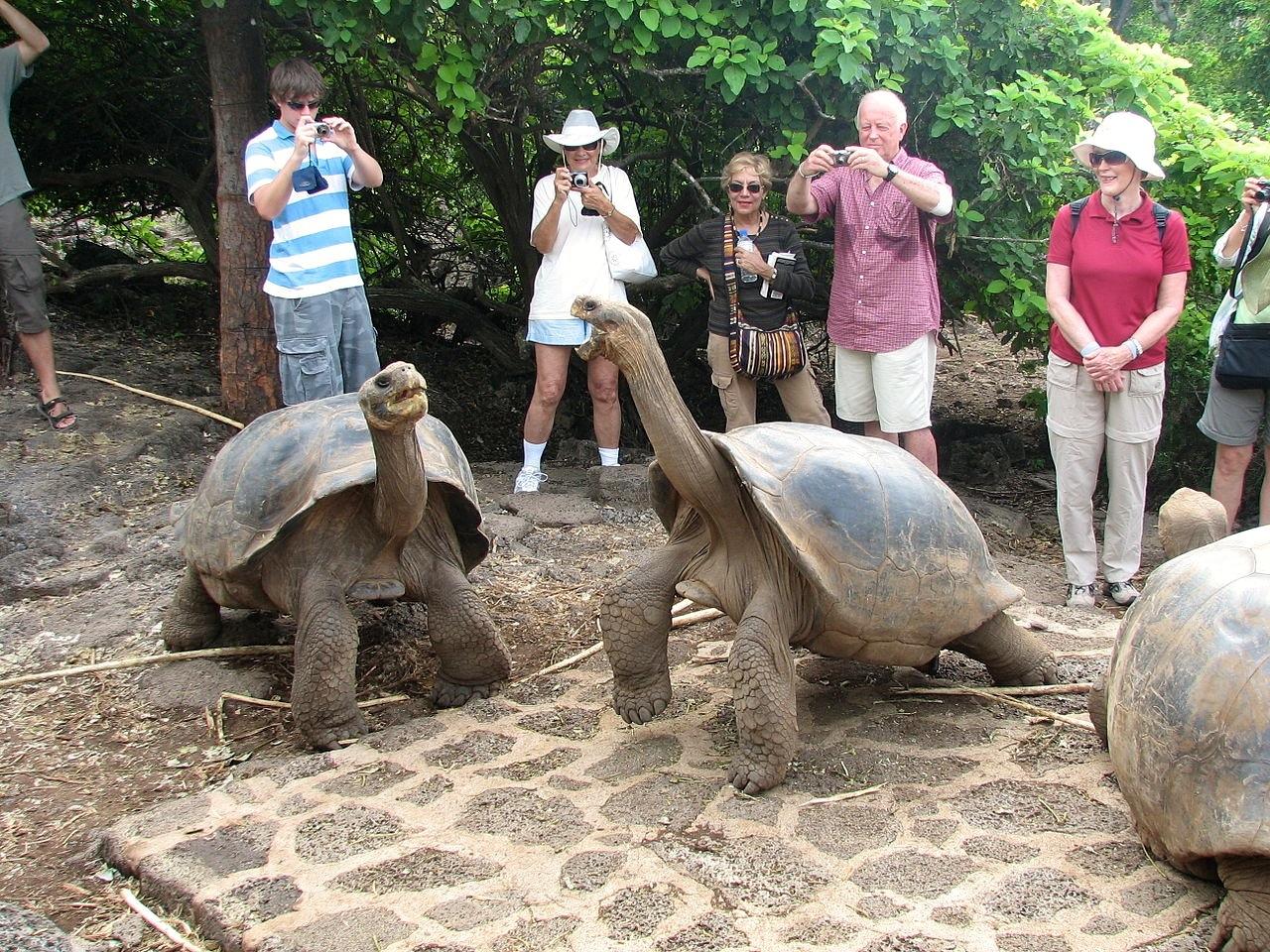 Galapagos 1 08