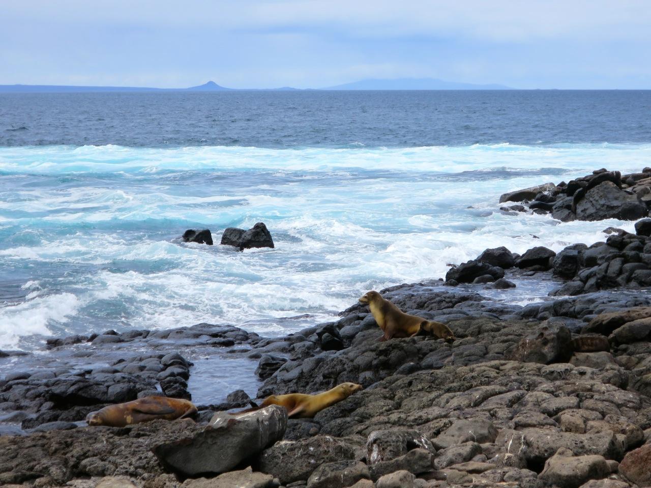 Galapagos 1 17
