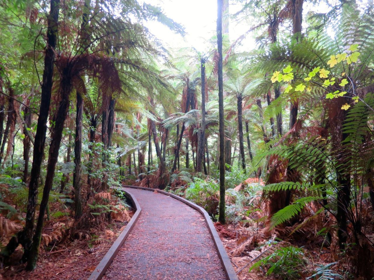 Rotorua 1 13b