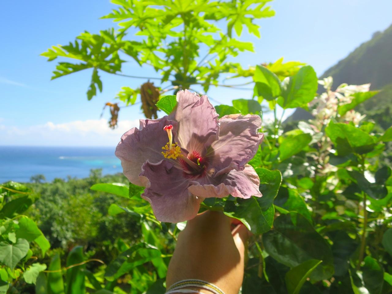 Taiti flores 1 01