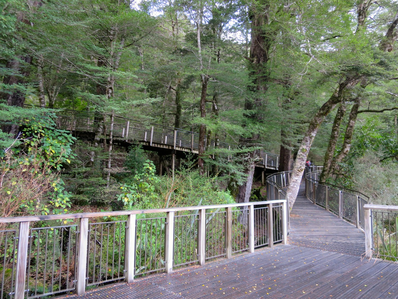 Milford Sound 1 06