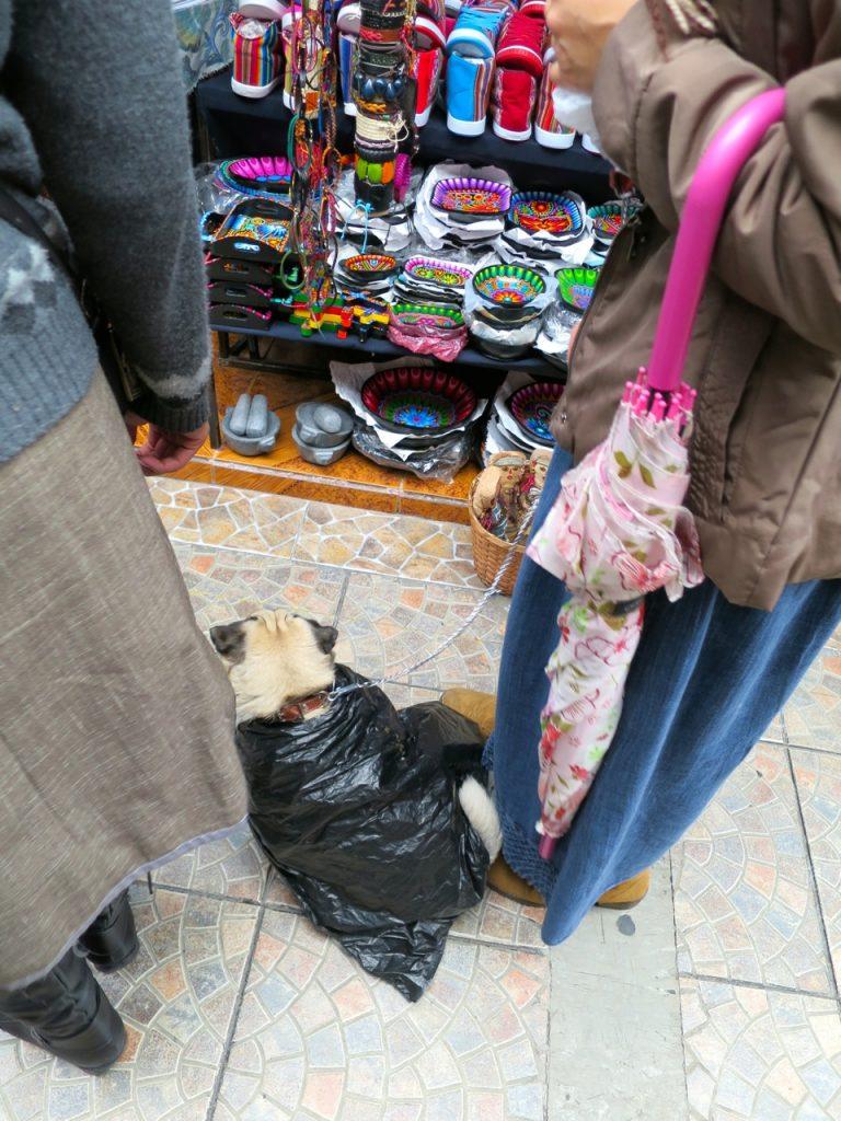 Quito 3 10