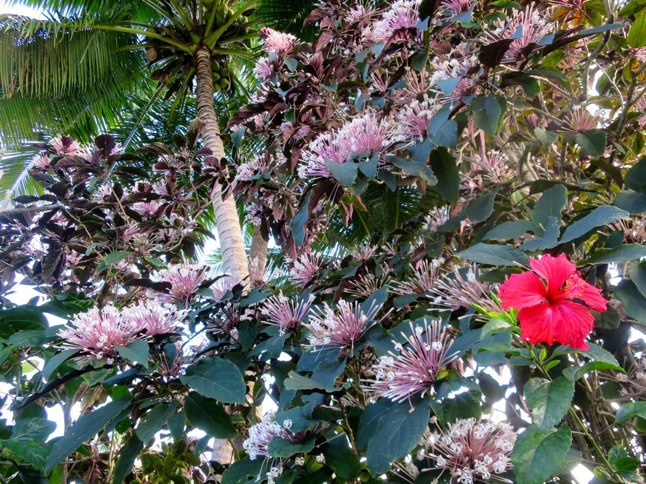 Taiti flores 1 03