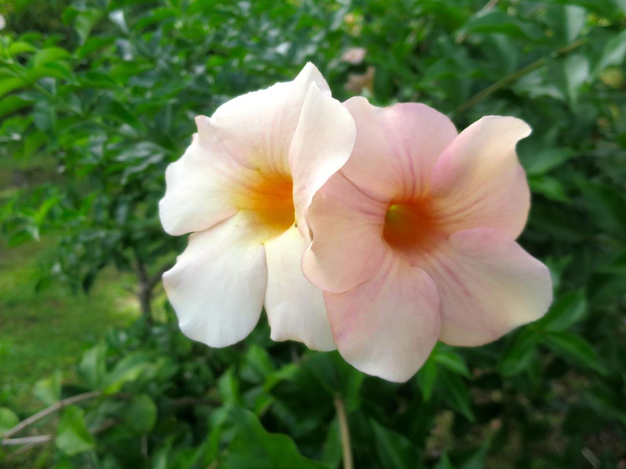 Taiti flores 1 09
