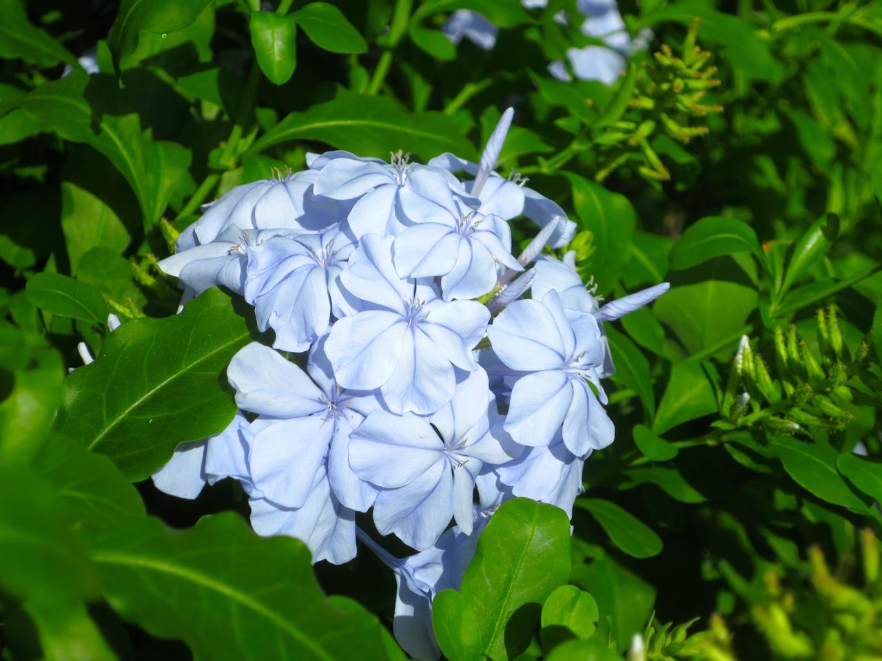 Taiti flores 1 12
