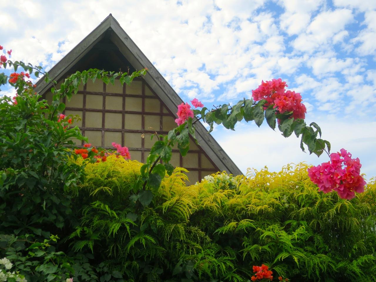 Taiti flores 1 16