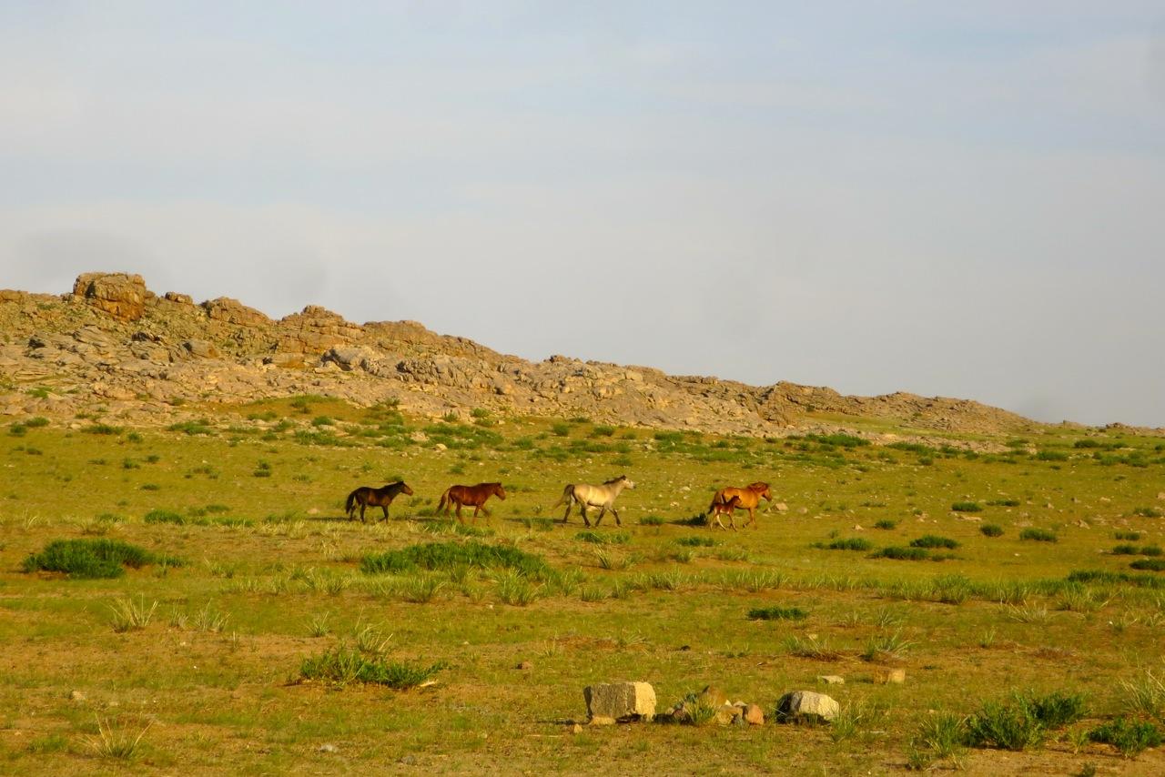 Tour Mongolia 1 17