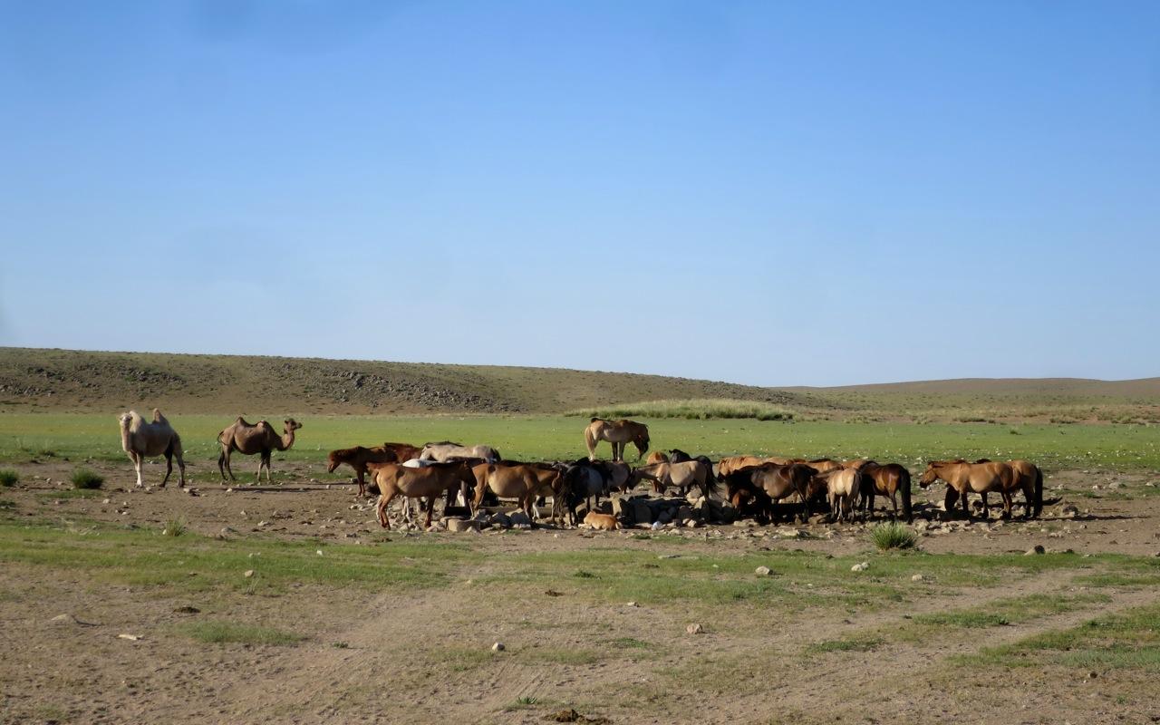 Tour Mongolia 1 21