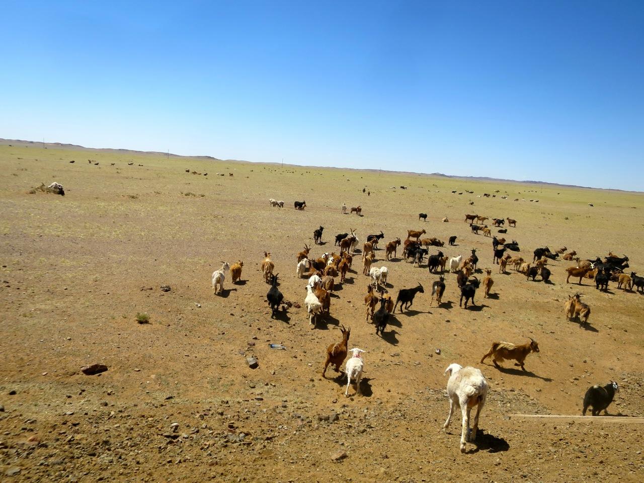 Tour Mongolia 1 25