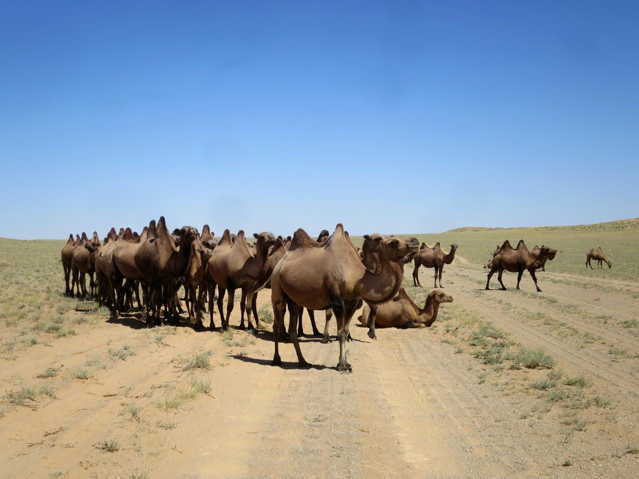 Tour Mongolia 1 26