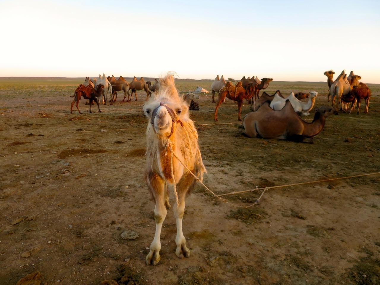 Tour Mongolia 1 34