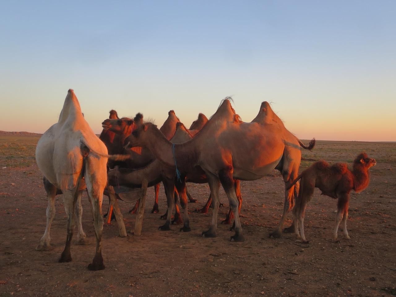 Tour Mongolia 1 35