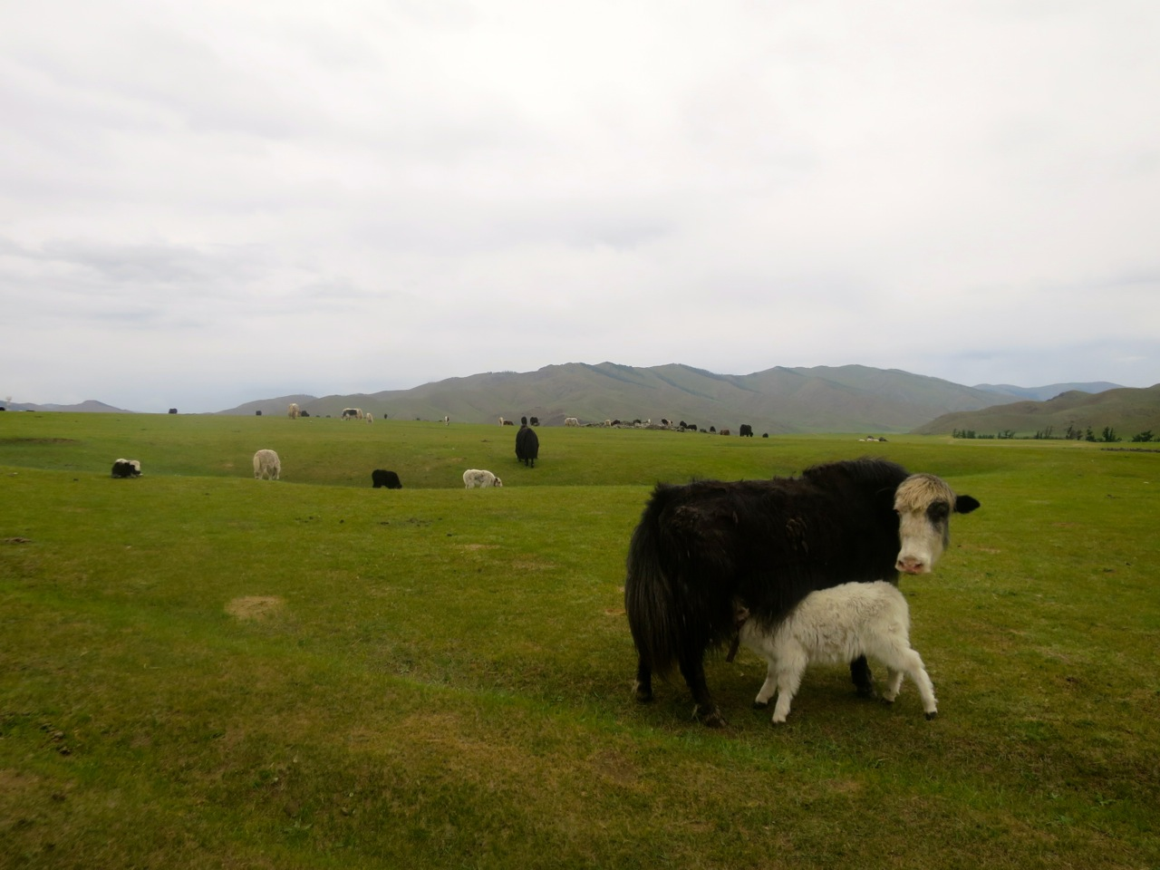 Tour Mongolia 3 18