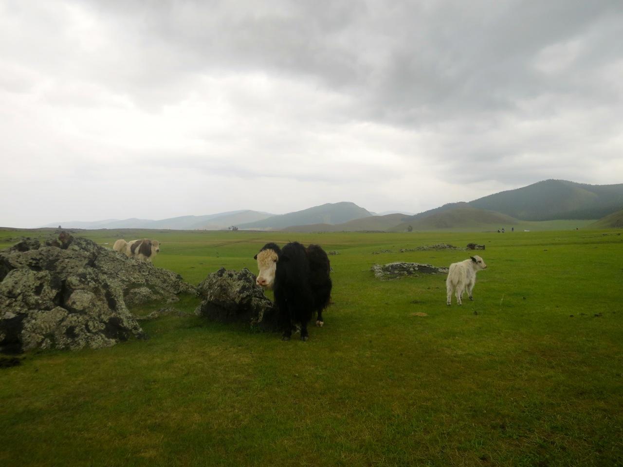 Tour Mongolia 3 24