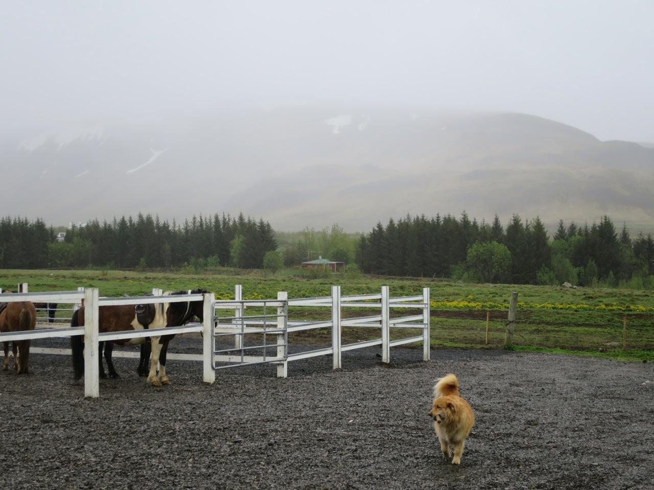 Islandia 5 03