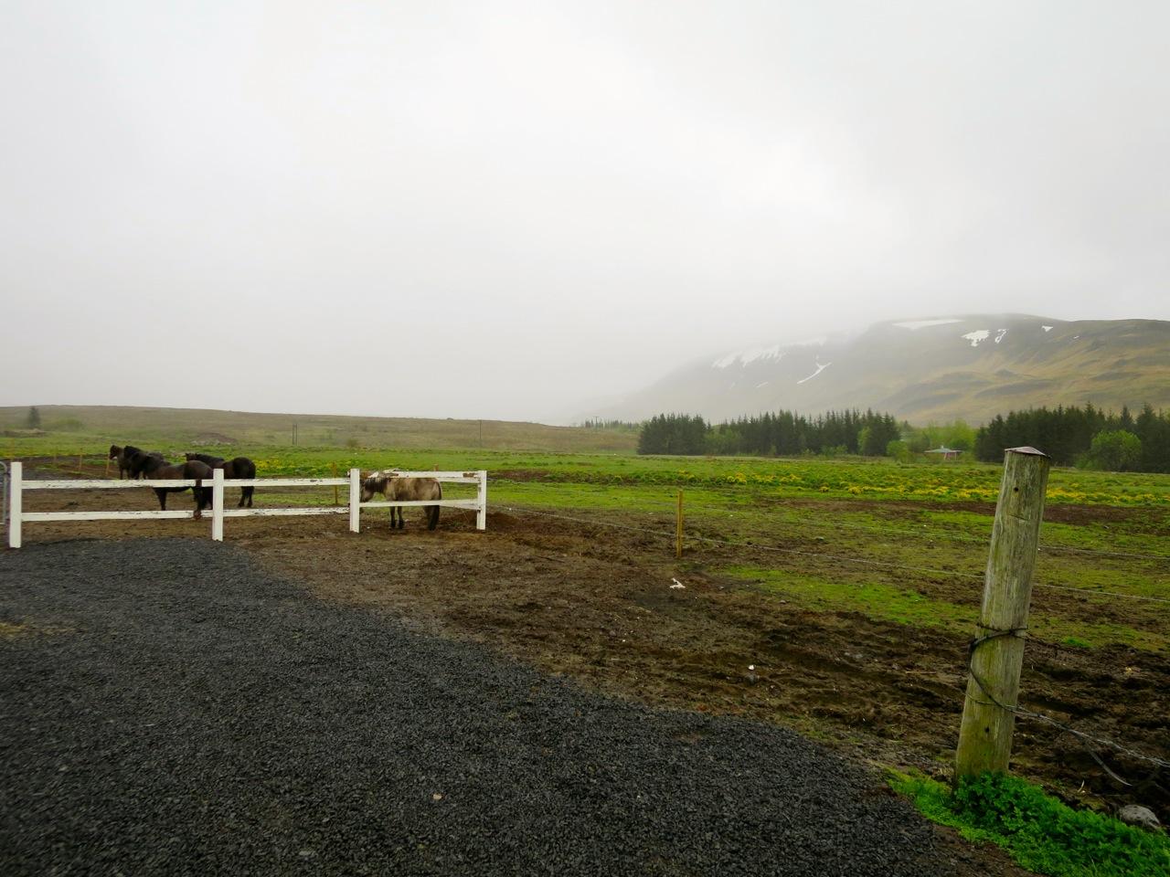 Islandia 5 07