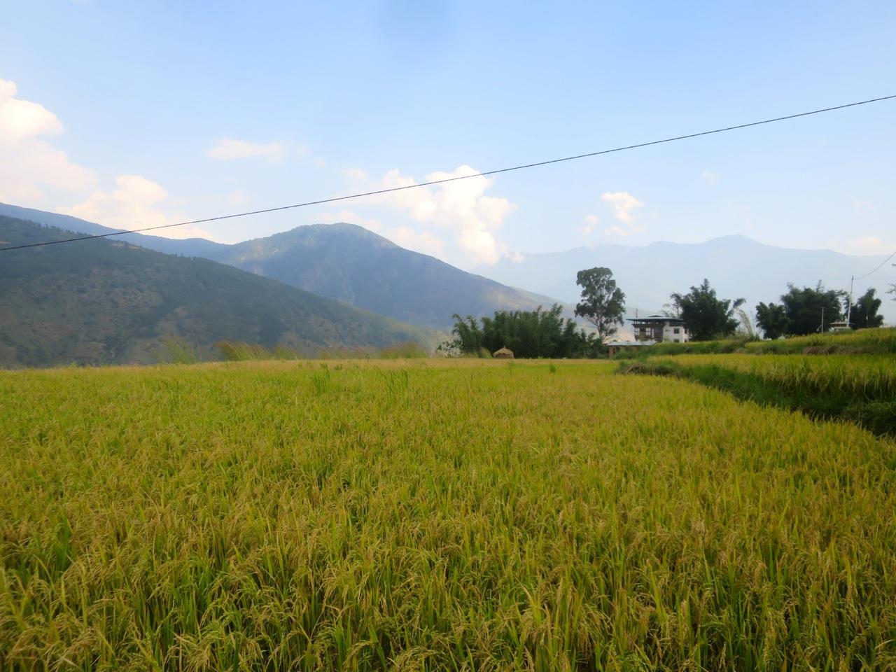 Bhutan 1 36