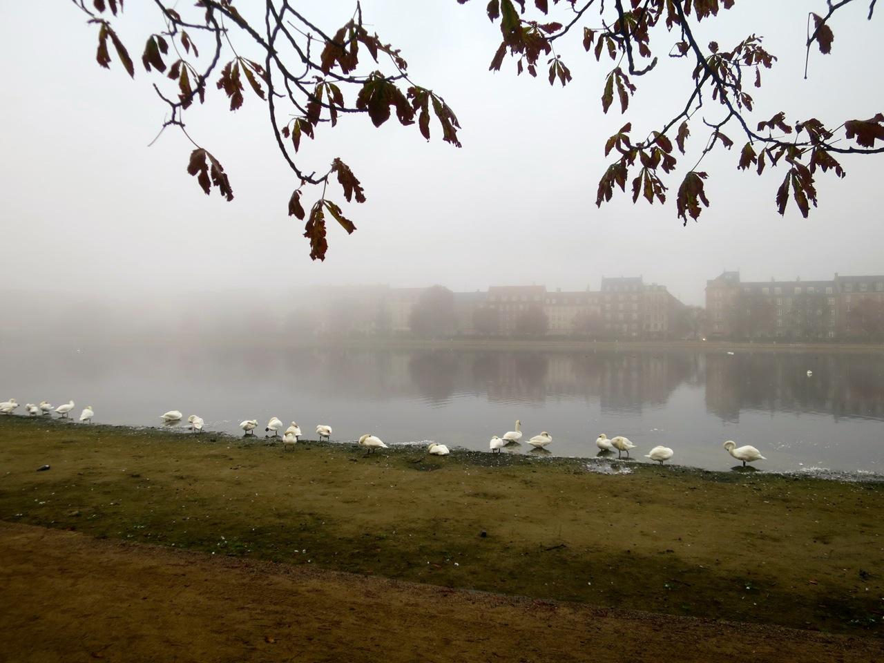 Copenhague outono 1 12