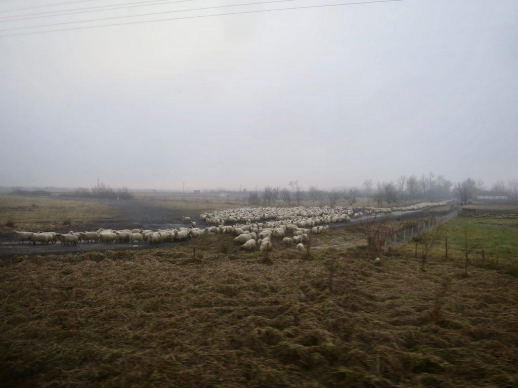 Trens na Romenia 1 02