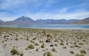 Atacama 1 02