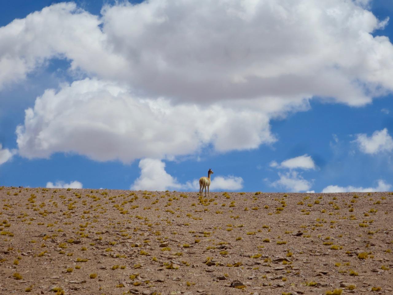 Atacama 2 11