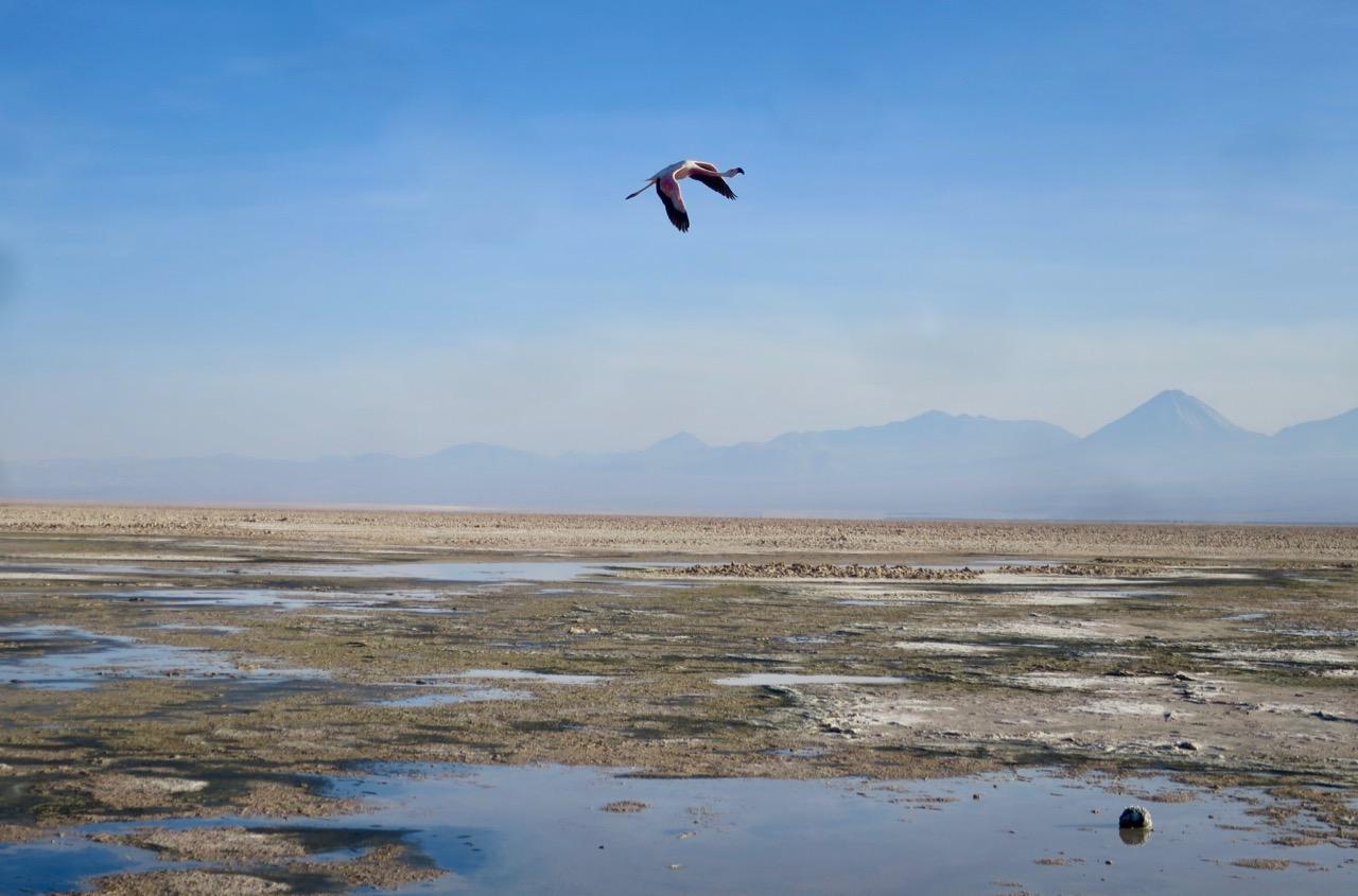 Atacama 3 03
