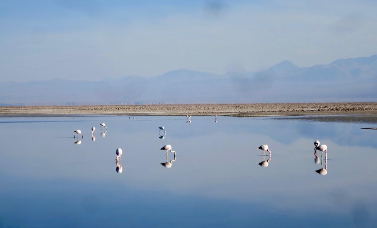 Atacama 3 06